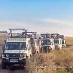 Congestion of safari verhicles to watch a leopard, Serengeti National Park, Tanzania